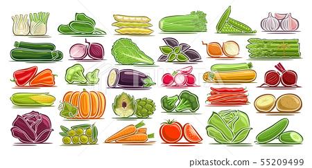 Vector set of fresh Vegetables 55209499
