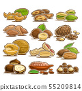 Vector set of Nuts 55209814