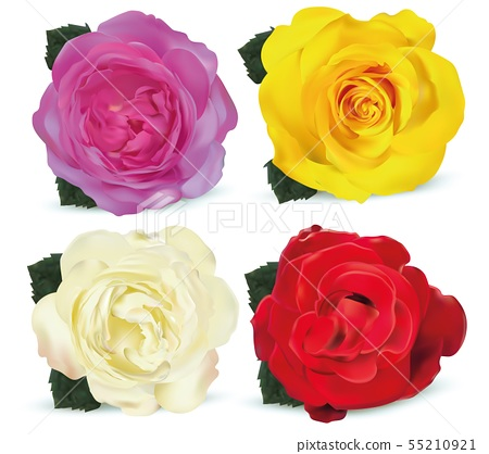 Beautiful set roses isolated on white background. Roses yellow, white, red, coral. 3d realistic 55210921