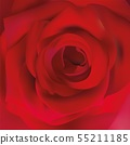 Macro red rose. Delicate red rose close up. Beautiful rose. Romantic background. Vector illustration 55211185