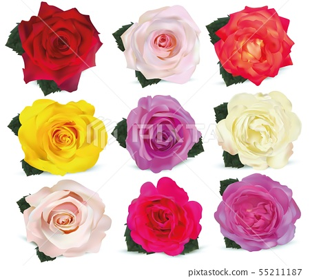 Collection roses on white background. Icon rose. Roses red, beige, purple, pink, white, coral 55211187