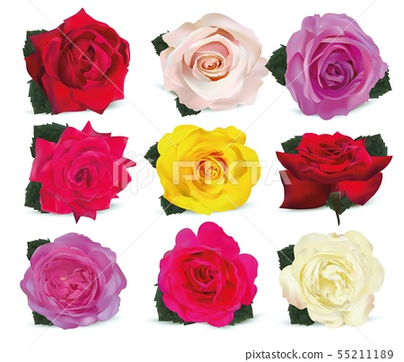 Collection roses on white background. Icon rose. Roses red, beige, purple, pink, coral, yellow 55211189