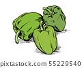 손으로 그린 일러스트 소재 : 야채, 고추 55229540