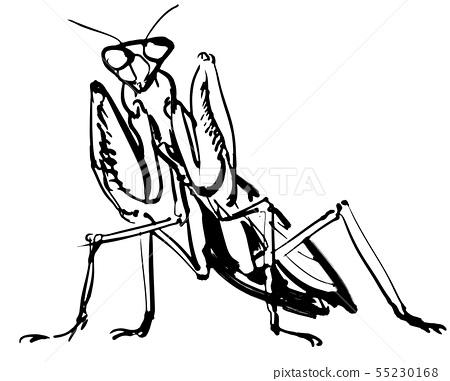 螳螂 55230168
