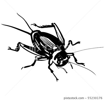 蟋蟀 55230176