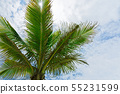 Palm treetop against cloudy sky 55231599