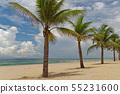 Palm trees on sandy beach against cloudy sky 55231600