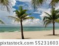 Palm trees on a beautiful sandy beach 55231603