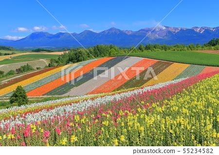 【홋카이도】 비 에이 사계 채의 언덕 55234582
