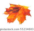 Autumn yellowed maple-leaf 55234603
