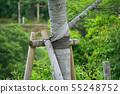 나무 줄기 줄기 감기 테이프 55248752