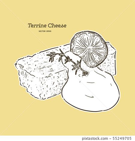 Terrine Cheese cake.  hand draw sketch vector. 55249705