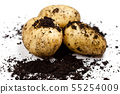 Newly harvested potatoes and soil isolated on 55254009