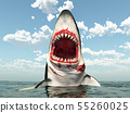 Great white shark leaping out of the water 55260025