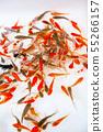 Goldfish scooping 55266157