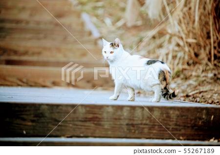 뒤를돌아보는 흰 고양이 55267189