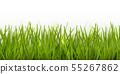 Vector realistic seamless green grass border or 55267862