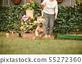 標準貴賓犬 55272360