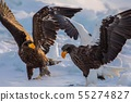 The sea eagle and white-tailed eagle 55274827