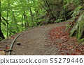 西泽谷老森林轨道散步 55279446