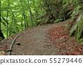 Nishizawa valley old forest track promenade 55279446