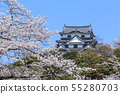 National treasure Hikone Castle and cherry blossoms in full bloom 55280703