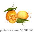 Fresh citrus fruit lemon with splashes. 55281861