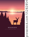 wildlife adventure elk in the wilderness by the lake at sunset 55282854