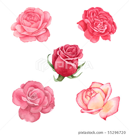 Roses Flowers watercolor collection 55296720
