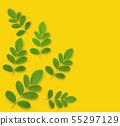 Horse radish tree isolated on yellow background 55297129