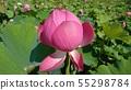 Lotus bud (pink) 55298784