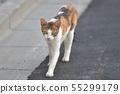 一隻寂寞的小貓 55299179