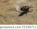 Fly macro on a rock 55300711