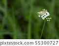 Cricket on a flower macro 55300727