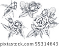 Set of hand drawn rose flowers and leaves isolated on white background. 55314643
