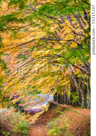 Maple Leave Tunnel in Japan 55315107