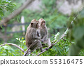 The monkey stop on branch tree in nature at 55316475