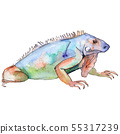 Exotic animal wild animal in a watercolor style. Background illustration set. Isolated reptilia 55317239