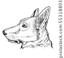 Portrait of German Shepherd dog 55318803