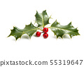 Holly - traditional Christmas plant 55319647
