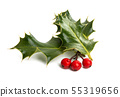 Holly - traditional Christmas plant 55319656