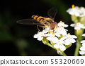 Hoverfly 55320669