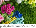 spring flowers 55328751
