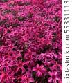 적자의 꽃 / Reddish violet flowers 55331113