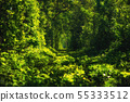 Beautiful tunnel of green trees . Tunnel of love. 55333512