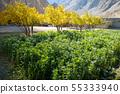 Organic vegetables in a garden. 55333940