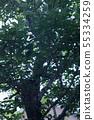 나무 55334259