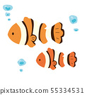 Clown anemonefish 55334531