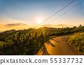 Road through Vineyard fields in sunset sun in 55337732