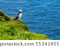 Atlantic Puffins (Fratercula arctica) on Mykines, 55341655